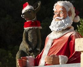 Deda Mraz među kengurima